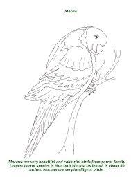 birds printable coloring kids 10