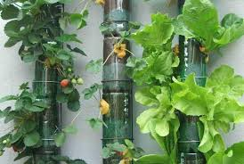diy vertical garden planters using plastic bottles