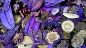 potpourri chunky lavender potpourri wholesale dried flowers shop