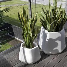 vasi da interno vaso per piante da esterno e interno ops m nicoli