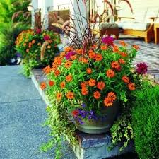 Summer Container Garden Ideas Summer Container Gardening Saleros Club