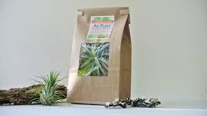 air plant terrarium grab bag air plant tillandsia living home