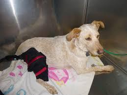 middletown animal hospital veterinarian in middletown ca usa