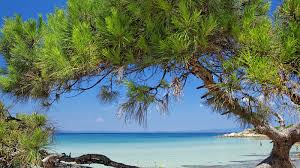 hotels halkidiki chalkidiki hotels resorts halkidiki hotels