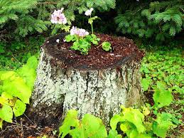 Summer Garden Plants - tree stump planting in your summer garden