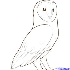 draw a barn owl step by step drawing sheets added by dawn