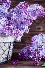 lilac flowers lilac flowers in basket lilacs flower and flowers