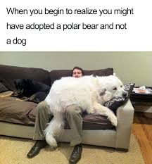 Cute Dog Memes - 10 of the happiest dog memes ever that will make you smile from