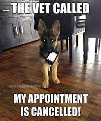 Dog At Vet Meme - even cute puppies can have epilepsy or dog seizures click to learn