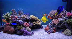Acrylic aquariums and fish tanks manufacturing and makers of acrylic aquariums and fish tanks