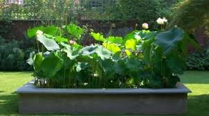 Garden Botanicals Lotus Garden The Lotus Garden Lotus Garden Botanicals Tetbi