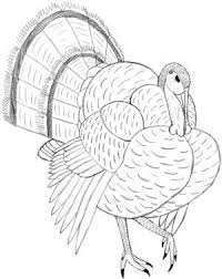 25 best thanksgiving images on drawings