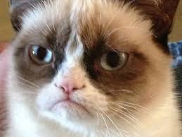 21 Of The Best Grumpy - from grumpy cat to gangnam style wired s best memes of 2012