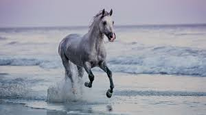 mustang horse running horse running on beach sunset santa barbara beach california