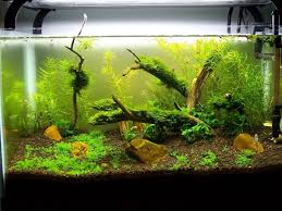 10 gallon fish tank decoration ideas