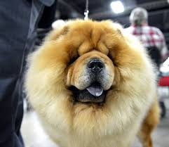 thanksgiving dog weekend event reminds us springfield held first dog show in u s