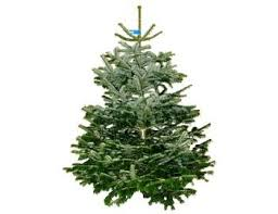 christmas tree prices real christmas tree prices best business template