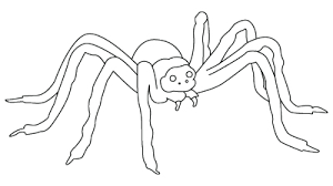 spider coloring sheet coloring drawing
