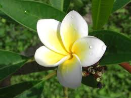 native plants in the tropical rainforest flora and fauna around matava resort matava