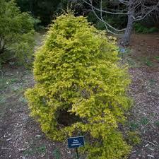 botanical gardens fort bragg ca festival of lights mendocino coast botanical gardens 460 photos 199 reviews