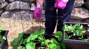 how to plant vegetables for an urban garden the home depot youtube