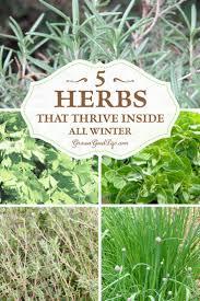 vertical indoor herb garden picmia
