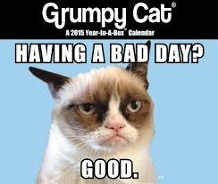 Grumpy Cat Mini Wall Calendar - the grumpy cat craze continues into the new year bigcitypet