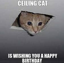 funny cat happy birthday memes trolls cat birthday memes