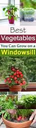 Indoor Window Planter Best 25 Indoor Window Garden Ideas On Pinterest Indoor Herbs