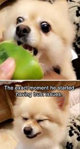 Dog Meme Generator - pin by rebecca jones bell on dogs pinterest funny animal