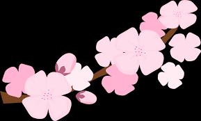 cherry blossom clipart free download clip art free clip art