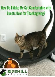 how do i make my cat comfortable with guests for thanksgiving