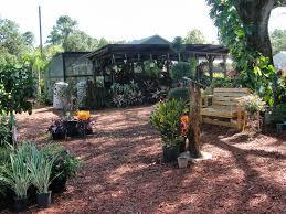 Landscape Nurseries Near Me by Central Florida Gardener Struthers Nursery U0026 Garden Center