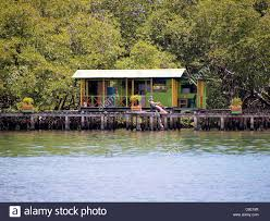 tropical bungalow over the water with mangrove in background stock