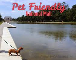 Washington traveling with pets images 79 best pets on the go images animals dog products jpg