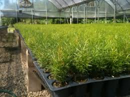 kps sales inc plantant