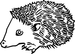 hedgehog coloring pages hedgehog coloring pages 3 nice coloring pages for kids