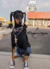pepperthedobie as snoop dogg doberman dobermanpinscher dobe