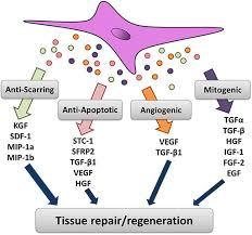 Tissue Renewal Regeneration And Repair Stem Cells For Bone Regeneration Role Of Trophic Factors Intechopen