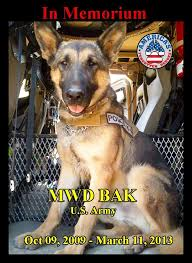 Military Police Meme - memorial day tribute to military dog bak killed in action in