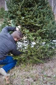 christmas tree farm love lola a life u0026 style blog