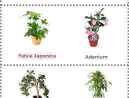 the best indoor plants what is the best indoor plant best indoor plants for your home