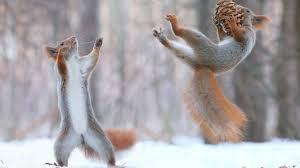 animals squirrel winter nature beautiful flying animal desktop