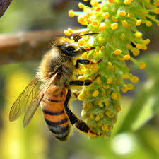 characteristics of living things the honey bee thinglink