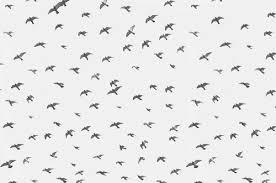 pattern illustration tumblr birds illustration pattern image 222759 on favim com
