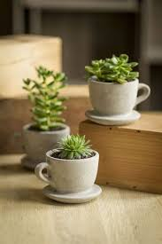 Desk Plant Succulents Planters Cute Little Desk Plants Succulents Home