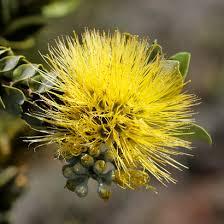 Hawaiian Flowers And Plants - t beth kinsey u2013 hawaiian plants and tropical flowers page 24