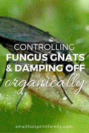 controlling fungus gnats organically gardens plants and garden