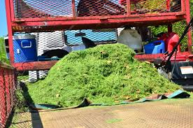What Does A Landscaper Do by Should Your Lawn Care Company Haul Off The Lawn Clippings