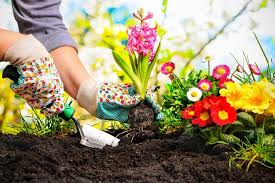 easy gardening for beginners trees plants nursery